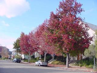 Crimson xmas 2008 04